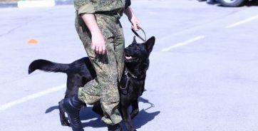 В кинологическом отделе Ростовской таможни работает 20 собак. Три из них специализируются на поиске взрывчатки, остальные - ищут наркотики.