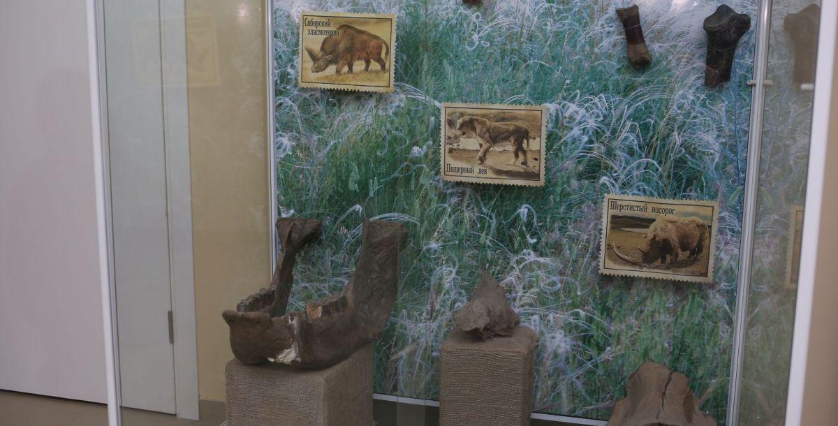 Это фрагменты костей сибирского эласмотерия, пещерного льва и шерстистого носорога.