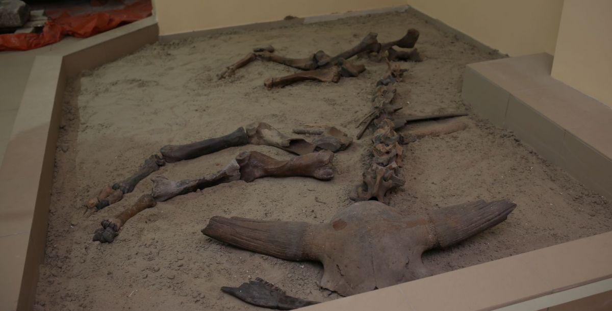 Во время строительства Цимлянской плотины в начале 1950-х годов были обнаружены фрагменты скелета первобытного бизона. Это животное появилось около 150 тыс. лет назад. В Приазовье бизон был основной добычей первобытных людей. Его высота– 2,2 метров в холке, весил он примерно 15 тонн, мог разгоняться до 60 км.