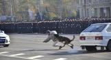 Кинологи выступили на параде со своими четвероногими напарниками. Собаки каждый день спасают жизнь людей, ловят преступников и обезвреживают бандитов. Вот и во время выступления они спасли девушку, на которую напала банда преступников.