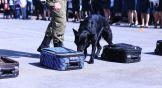 Собака по очереди обнюхала каждый чемодан и остановилась у того, в который кинолог незаметно подложил сверток.